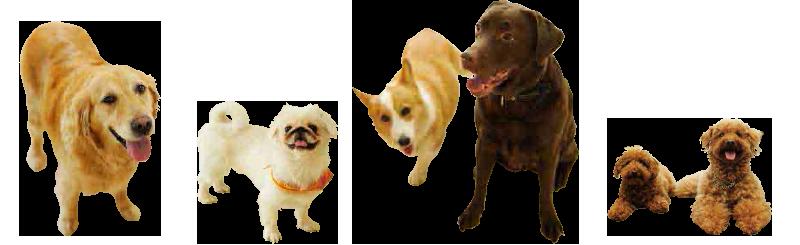 トレーニング犬