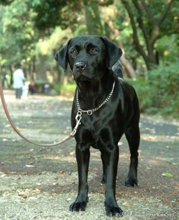 dog-041-1